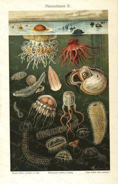 Antique Original colored  Lithograph of Sealife by RarePostCards