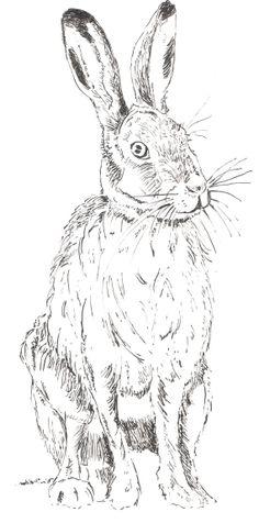 Hare  Print by DebbieSheldonArt on Etsy, £10.00