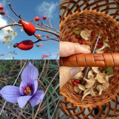 Flowers in Crimean Wood.Fantastic Nature