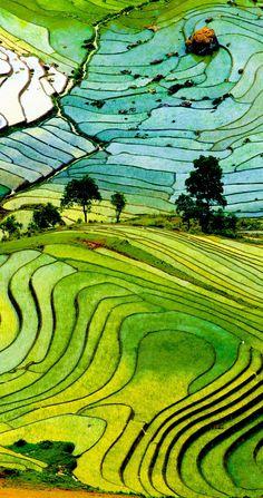 Fotos De Campos Del Arroz. Impresionante Vietnam