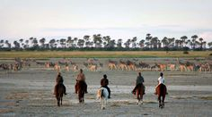 A horseback safari is one of the most thrilling adventures Africa has to offer. Galloping, fording rivers and trotting alongside other animals of the savannah, accompanied by qualified guides who are there to help you experience your natural surroundings, is a timeless adventure. Just picture yourself in the saddle, riding through the grasslands in close contact with the most pristine natural settings.  © Image courtesy of Uncharted Africa Safari co.