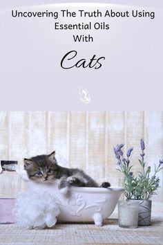 Uncovering The Truth About Using Essential Oils With Cats - Organic Aromas Calming Essential Oils, Are Essential Oils Safe, Natural Health Remedies, Herbal Remedies, Elixir Floral, Calming Cat, Garlic Health Benefits, Receding Gums, Natural Healing