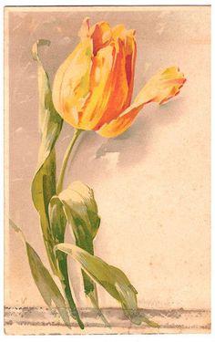 Flowers701