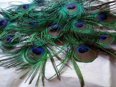 Peacock Feathers Huge All Seeing Eye 2.5in by CherylsGoodStuff, $5.00