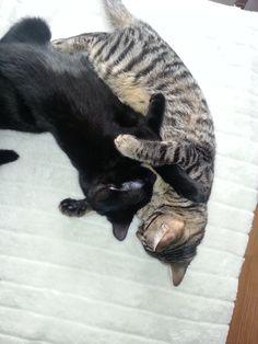 Mijn 2 lieve katjes van 1 jaar oud.