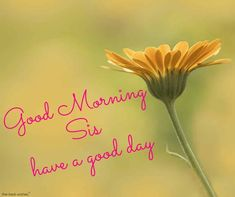 good-morning-sis-have-a-good-day Good Morning Sister Images, Good Morning Gif, Good Morning Greetings, Morning Pictures, Good Morning Wishes, Morning Sayings, Prayers For Sister, Wishes For Sister, Beautiful Day Quotes