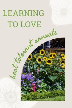 Which heat-tolerant annuals do well in the oasis of my front yard? Click the link to read about the seven best full-sun flowers I've successfully grown over the year Full Sun Flowers, Full Sun Plants, Hibiscus Plant, Learn To Love, Over The Years, This Or That Questions, Gardening, Learning, Oasis