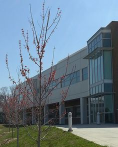 40 Around Forsyth Campus Ideas Campus Fun Activities Faculties