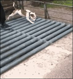 GIF Literally, dragging himself home. Wasted.   Community Post: 21 Animals Who Are Obviously Wasted