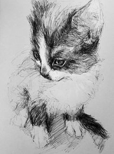 What a beautiful sketch - we would like personalised ones of our pets in the Groomers office!