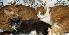 """Max, Charles, and Baby Tabby. When Tabitha grew up she was more properly known as """"The Queen."""""""