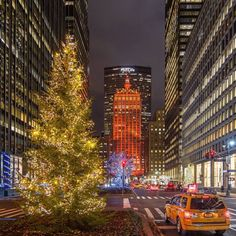 Illuminated trees and Helmsley Building on Park Avenue by New York City Christmas, Mary Christmas, Work In New York, New York Photography, Chrysler Building, I Love Ny, City That Never Sleeps, Rhythm And Blues, Concrete Jungle