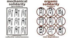 organic solidarity example