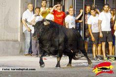 torodigital: El Grao de Castellón encara la recta final de los...