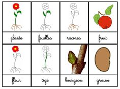 Crapouillotage: Cartes de Nomenclatures : La plante Montessori Science, Montessori Baby, Cycle 3, Woodland Party, Learning Resources, Spring Crafts, Permaculture, Petite Section, Natural
