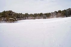 Тупик.Ru: Первомайская поляна в Курортном парке Кисловодска ...