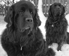 Maurice & Thelma