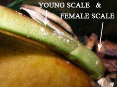 female-scale