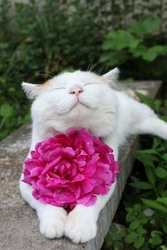 cat posing with flower
