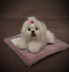 My Little Maltese Puppy created from alpaca, leather paw pads.