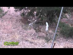 Bowhunting Kill Shots - Closing the Distance TV - Lumenok - YouTube
