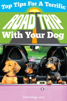 Make road trips easy on your pet!