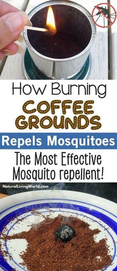 8 Brilliant Ways To Recycle Used Coffee Grounds DIY Natural mosquito repellent. How to burn coffee grounds to repel mosquitos and other insects at home. Most effective bug repeller! Repelir Mosquitos, Mosquitoes Bites, Natural Mosquito Repellant, Diy Mosquito Repellent, Mosquito Spray, Mosquito Plants, Insect Repellent, Rat Repellent, Camping Hacks