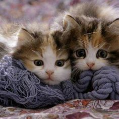 If this pair don't make you go 'awwww' then I don't know what will!