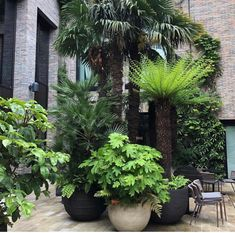 Container gardening, study the gardening post information number 2955177799 to adding flowers in a container. Small Front Gardens, Back Gardens, Outdoor Gardens, Tropical Garden Design, Small Garden Design, Jungle Gardens, Garden Mirrors, Balkon Design, Small Space Gardening
