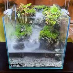 Mini Terrarium, Terrarium Plants, Succulent Terrarium, Indoor Water Garden, Indoor Plants, House Plants Decor, Plant Decor, Aquarium Landscape, Cute Car Accessories