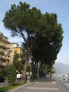 Sarnico (Bergamo) Lake Iseo, Italy