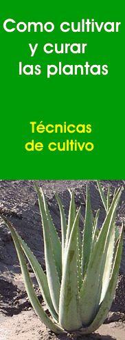 Como cultivar y curar las plantas (muy interesante)