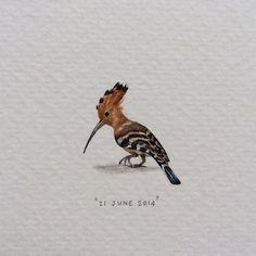 Day 172 : Hoopoe | Upupa Epops. 19 x 22 mm. #365postcardsforants #miniature #watercolour #wdc624 #hoopoe #bird #capetown