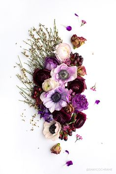 Floral branding images in various colors! Floral styled stock is the most versatile and can be used across brands! Shop the SC Stockshop's floral stock images! Art Floral, Floral Style, Flower Backgrounds, Flower Wallpaper, Ultra Violet, Cute Wallpapers, Flower Designs, Flower Art, Red Roses