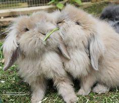 10 of the cutest things bunnies do  http://best4bunny.com/rabbit-behaviour-10-cutest-things-bunnies/