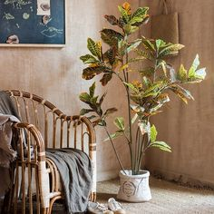 World Menagerie Autumn Leaf Banyan Tree in Pot Size: H x W x D Potted Trees, Trees To Plant, Banyan Tree Bonsai, Fiddle Leaf Tree, Yellow Plants, Silk Plants, Decorative Planters, Lantern Candle Holders, Artificial Tree
