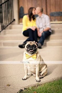 Engagement photo session with pug dog Www.facebook.com/dalymoments