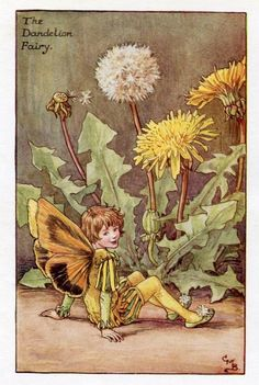 Pissenlit fleur fée Vintage d'impression, c.1927 Cicely Mary Barker livre plaque Illustration