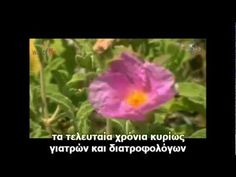 Cistus Incanus by LR (gr subs) Way of Life seminars Health And Beauty, Make It Yourself, Youtube, Life, Essen, Youtubers, Youtube Movies