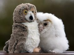 Baby owl with a stuffed animal owl!! So cute!