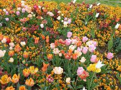 Buntes Frühlingsbeet - Bilder und Fotos