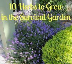 10 Herbs To Grow in the Survival Garden - Backdoor Survival