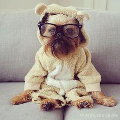 I am so cute!   Digby van Winkle