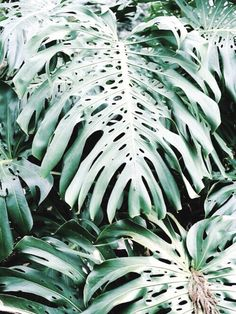 green, plants, and tropical image Cactus, Belle Plante, Go Green, Green Girl, Tropical Leaves, Green Plants, Botany, Indoor Plants, House Plants