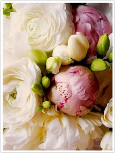white persian buttercups were grouped with freesias and peonies (both white and pink)
