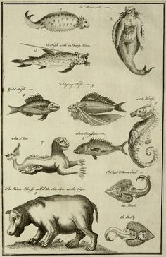 Mid 18th Century antique copper engraving of : Sea Horse, Mermaid, Sea Lion... 260 years old gorgeous print