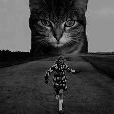 """Результат пошуку зображень за запитом """"kitten"""""""