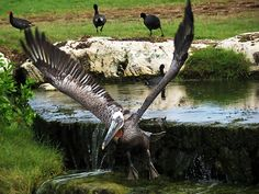Aruba - birds, not just bars :)