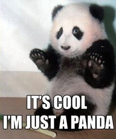 Just a Panda - funny pictures - funny photos - funny images - funny pics - funny quotes - #lol #humor #funny