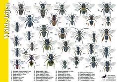Herkenningskaart Wilde bijen | Landschap Noord-Holland, diverse zoekkaarten